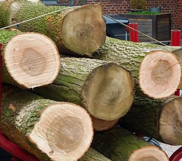 Oak Firewood: Cords